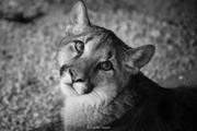 CF animal series-5.jpg