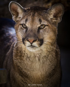 CF animal series.jpg