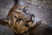 CF animal series-7.jpg