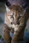 CF animal series-6.jpg