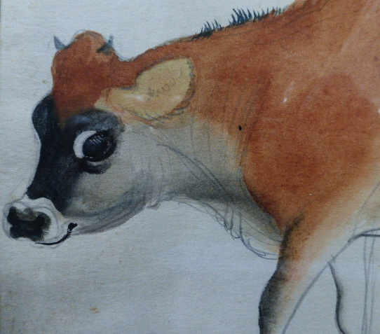 Manda the Jersey Cow(detail)