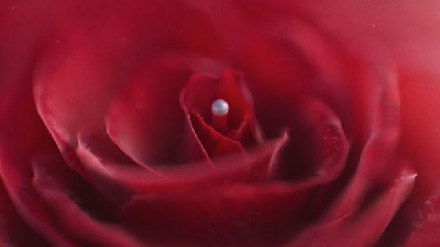 ROSE / PEARL