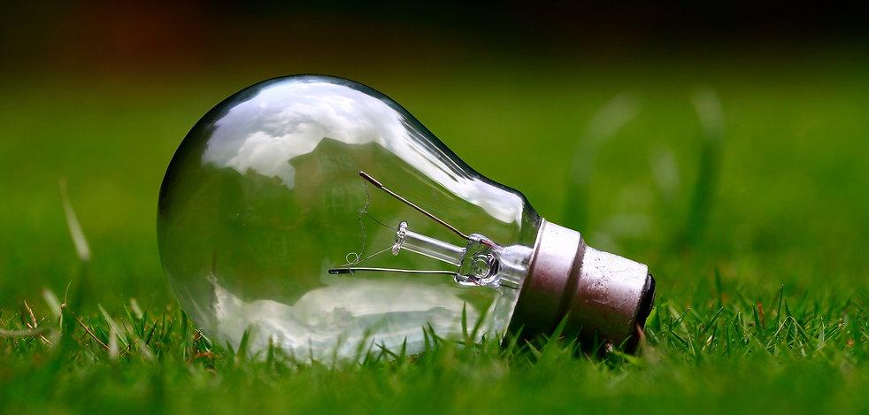 bulb-grass.jpg