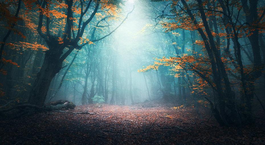 Beautiful mystical forest in blue fog in