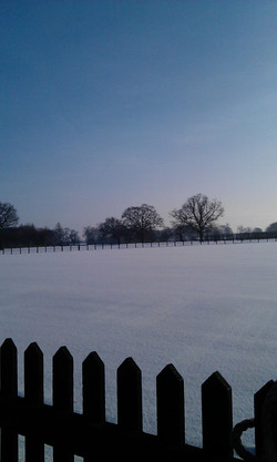 Winter at Alne CC