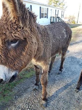 012520_donkey_04.jpg