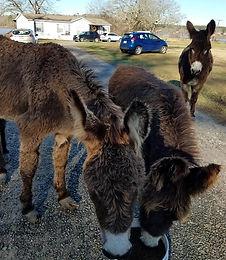 012520_donkey_03.jpg