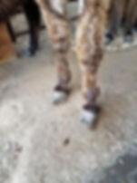 012520_donkey_02.jpg