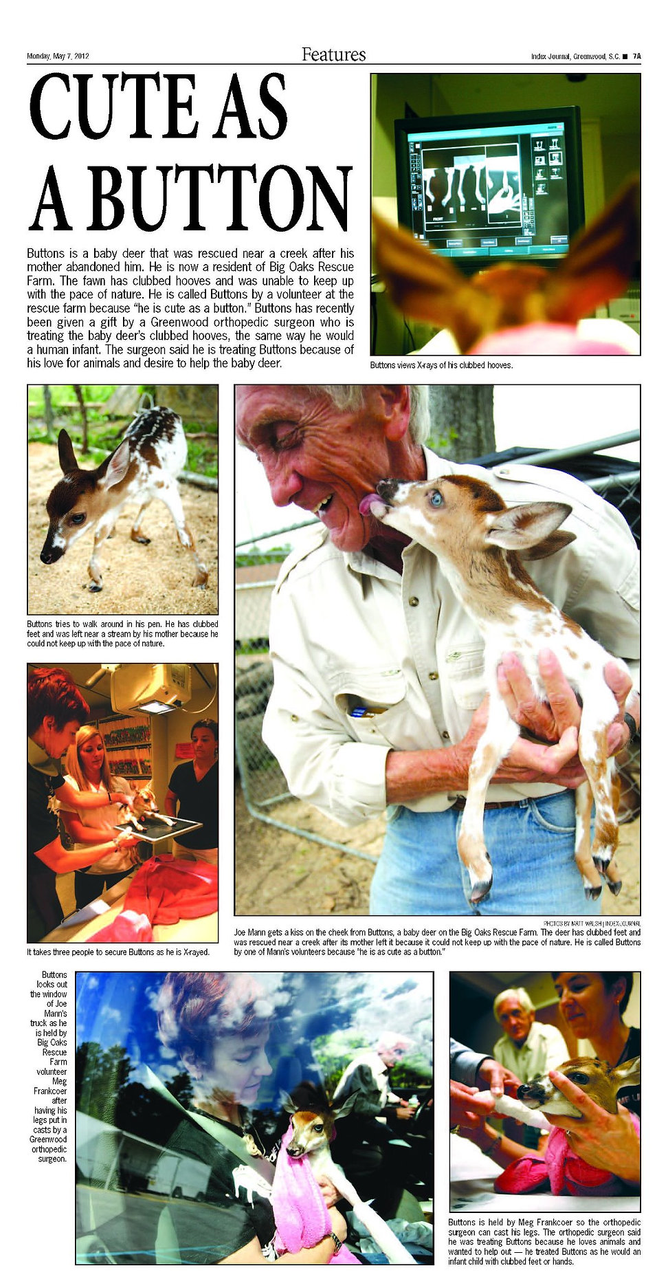 Big Oaks Farm News: The rescue of Buttons a fawn, abandoned by his mother and now resident at Big Oaks Rescue Farm
