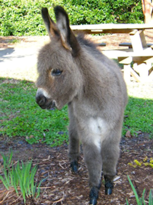 Donkeys and Mules!