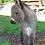 Thumbnail: Donkeys and Mules!