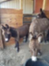 012520_donkey_01.jpg
