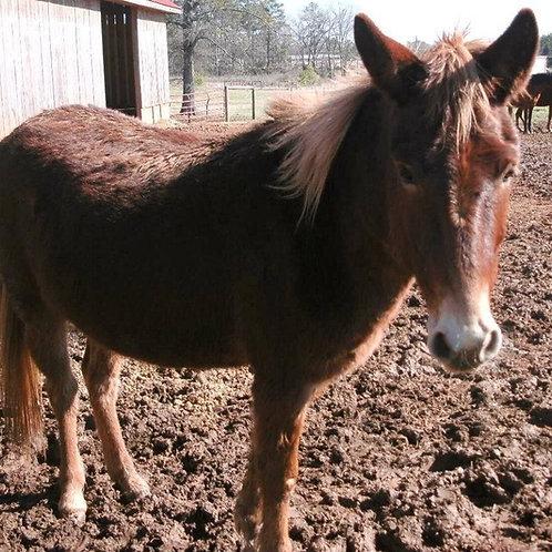 Little Red - Mule