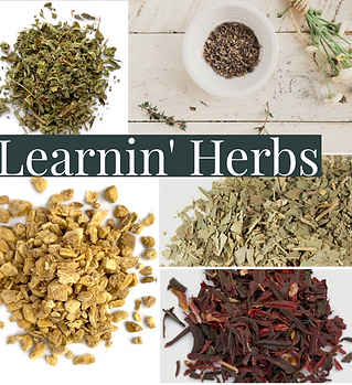 Learnin' Herbs