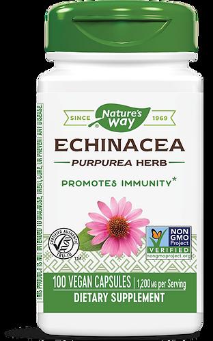 Echinacea Root Complex