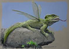 NZ Dragon