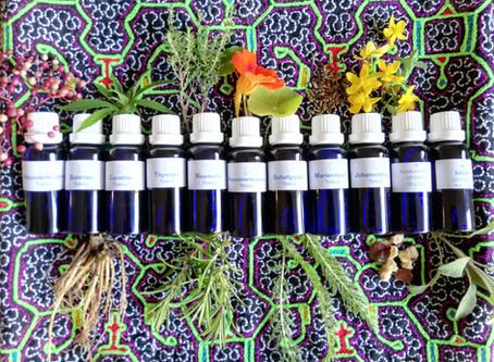 Heilkräuter und Kunst machen stärken das Immunsystem!