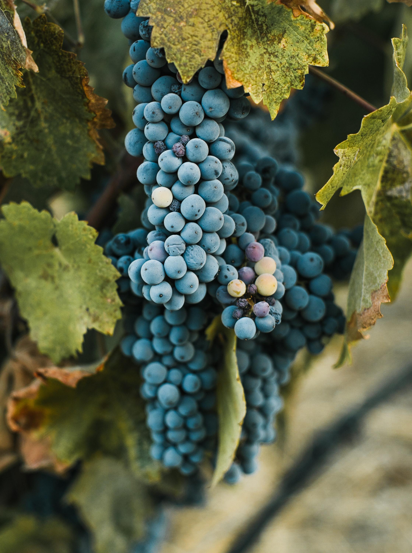 Mallorcan Wine Tasting
