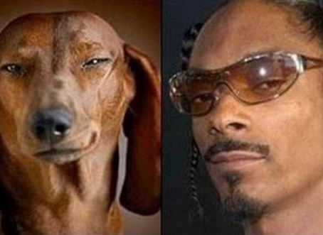 Dogs That Look Like Celebrities | 20 Funny Memes To Bark About