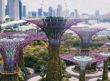 5 Things You Must Do When in Singapore