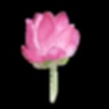 Lotus1.png