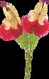 Salvia 19.png