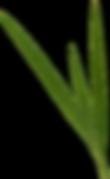 Grass 7.png
