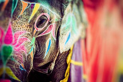 Elephant. India, Jaipur, state of Rajast