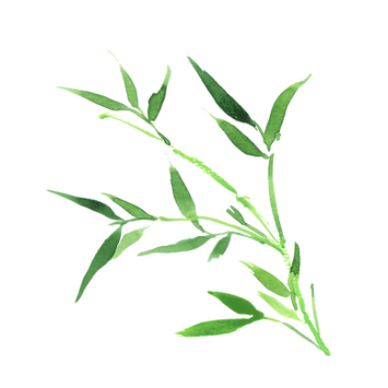 Bamboo small1.png