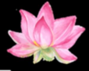 Lotus3.png
