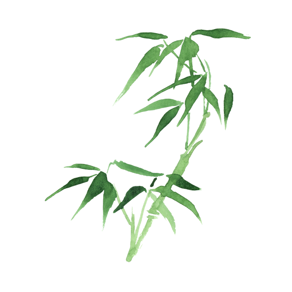 bamboo small2.png