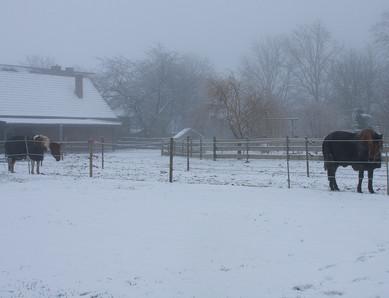 Im Schnee Apanatschi und Chico