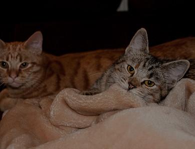 Timon und Feline