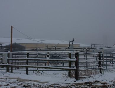 Führanlage im Schnee