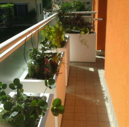 irrigazione5.jpg