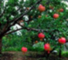 piante da frutto.jpg
