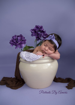 newborn-purple-flower-pot