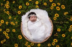 newborn-flower-field