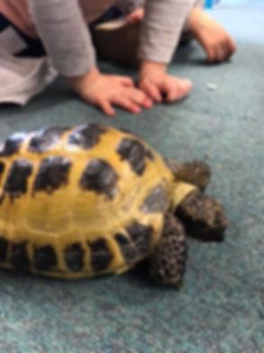 Hands and tortoise.jpg