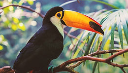 MAKE A CHANGE RAISE $5900 FOR THE CURU NATIONAL WILDLIFE REFUGE IN COSTA RICA.