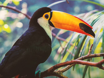 Make a change! Raise $5,900 for the Curu National Wildlife Refuge in Costa Rica