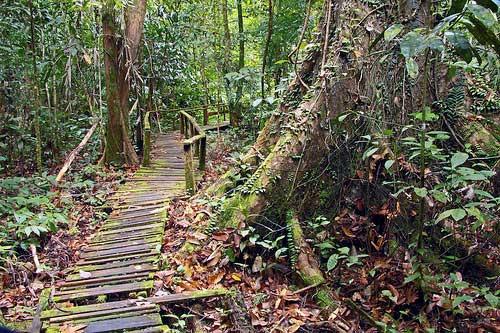 kubah-national-park-09jpg