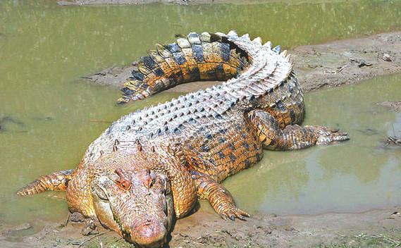 jong-crocodile-farm-06jpg