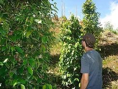 Ukom Pepper Garden 1.jpg