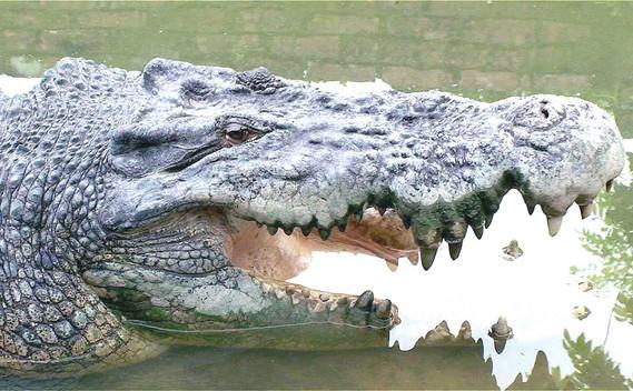 jong-crocodile-farm-05jpg