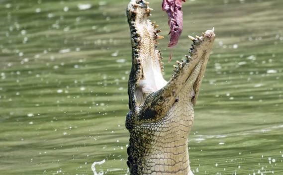 jong-crocodile-farm-01jpg