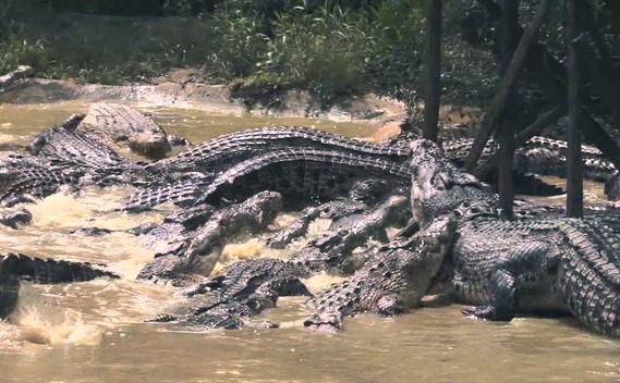 jong-crocodile-farm-02jpg
