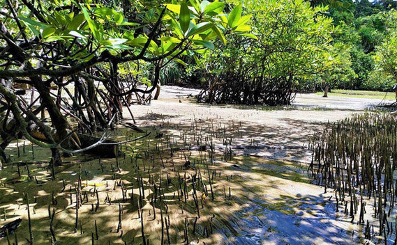 bako-national-park-mangrove-forestjpg
