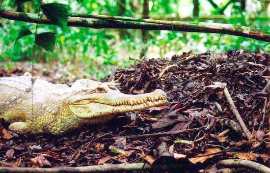 jong-crocodile-farm-07jpg
