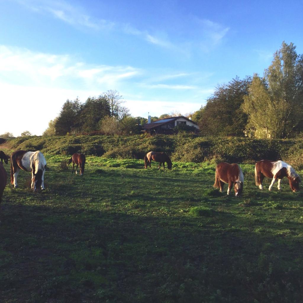 Le troupeau de petits poneys